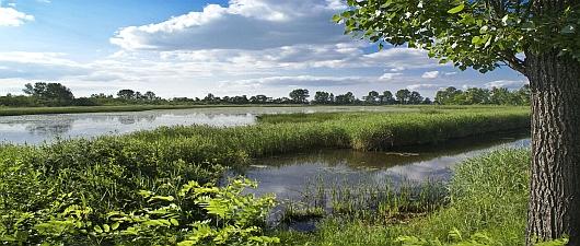 Rezerwat florystyczny w Nowej Kuźni